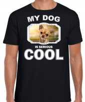 Chihuahua honden t shirt my dog is serious cool zwart voor heren