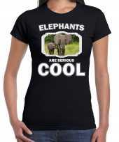 Dieren olifant t shirt zwart dames elephants are cool shirt olifant met kalf