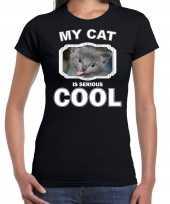 Grijze kat katten poezen t shirt my cat is serious cool zwart voor dames